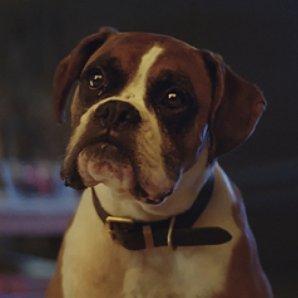 Buster The Dog John Lewis
